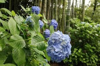 自然の写真・画像素材[56535]
