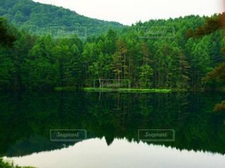 緑の写真・画像素材[687295]