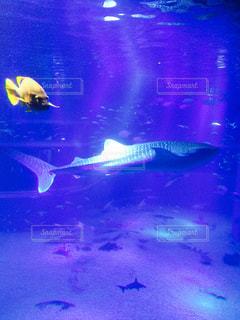 魚の写真・画像素材[684261]