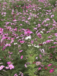 庭に紫の花の写真・画像素材[1756765]