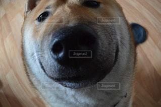 犬の写真・画像素材[11555]
