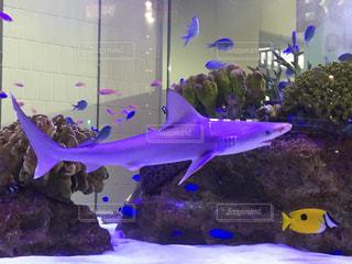 魚 - No.687643