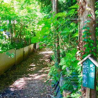 庭の木 - No.779660