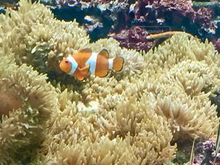 サンゴの水中ビュー - No.779728