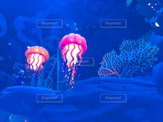 サンゴの水中ビュー - No.792828