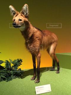 芝生の上の犬の地位の写真・画像素材[850090]