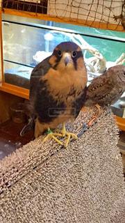 テーブルの上に座っている鳥の写真・画像素材[850103]