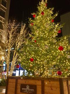 夜ライトアップされたクリスマス ツリーの写真・画像素材[879904]