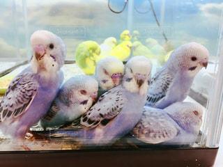 テーブルの上に座っている鳥の写真・画像素材[935916]