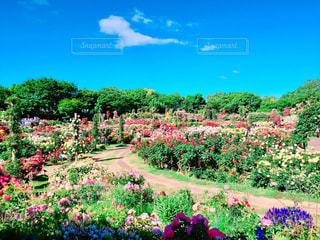 近くのフラワー ガーデンの写真・画像素材[1251328]