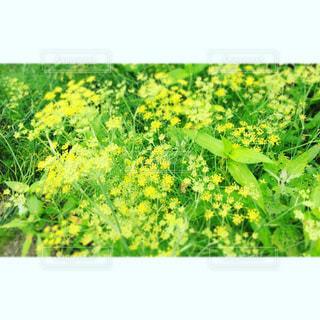 自然の写真・画像素材[685751]
