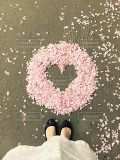 桜でハートを作りました^ ^の写真・画像素材[1628727]