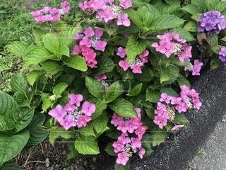 花の写真・画像素材[2252546]