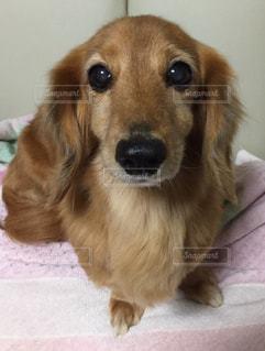 犬の写真・画像素材[354253]