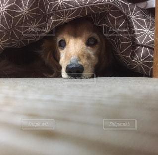 No.354307 犬