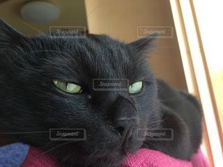 猫の写真・画像素材[685161]