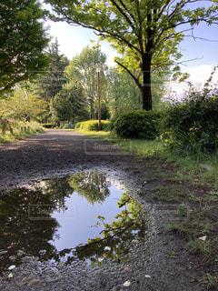 川の側に木がある道の写真・画像素材[3214766]
