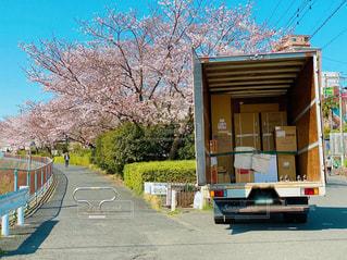 桜並木と引越しトラックの写真・画像素材[3274544]