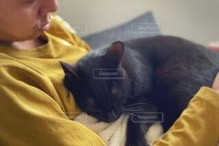 猫を抱いている人の写真・画像素材[3771472]