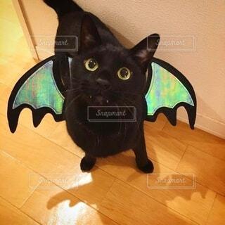 コウモリの仮装をする黒猫の写真・画像素材[3771498]