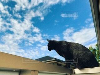 青空と黒猫の写真・画像素材[3791654]