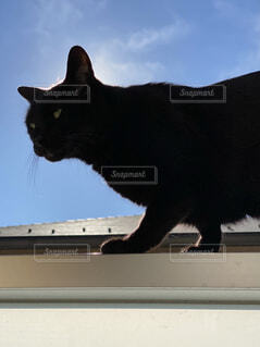 ベランダの柵に上る黒猫の写真・画像素材[4034439]