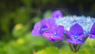 花の写真・画像素材[687886]