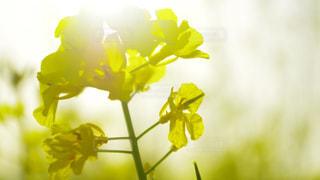 花の写真・画像素材[687897]