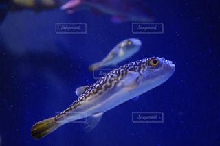 水面下を泳ぐ魚たちの写真・画像素材[1029115]