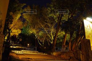 夜ライトアップされたツリーの写真・画像素材[1052969]