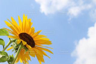 花の写真・画像素材[687471]