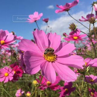 花の写真・画像素材[687488]