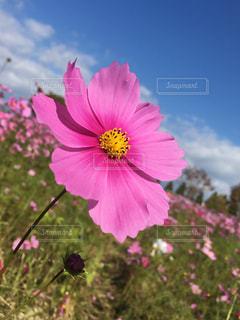 花の写真・画像素材[687490]