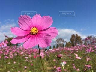 花の写真・画像素材[687491]