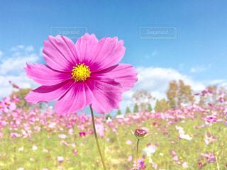 花の写真・画像素材[687532]