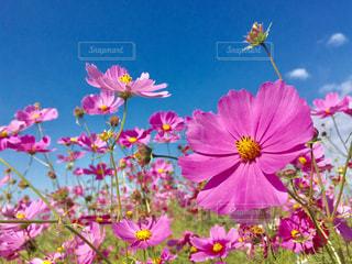 花の写真・画像素材[687533]