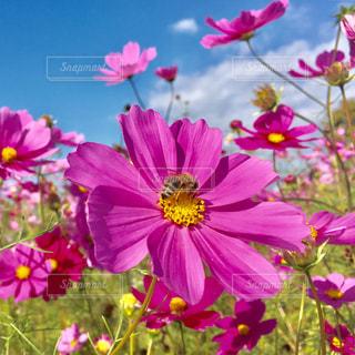 花の写真・画像素材[687534]