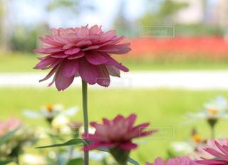 植物にピンクの花の写真・画像素材[733203]