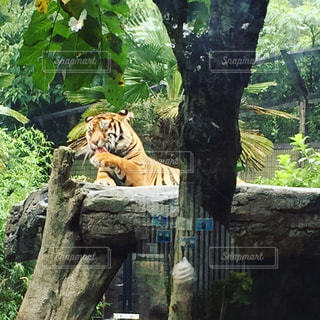 動物園の写真・画像素材[687188]