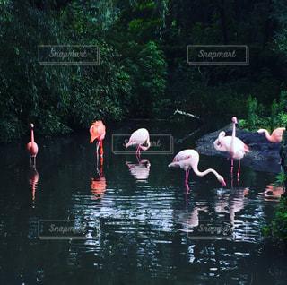 鳥の写真・画像素材[687189]
