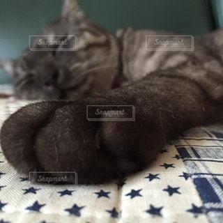 猫の写真・画像素材[691371]