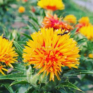 花の写真・画像素材[700240]