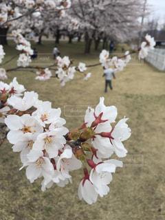 花の写真・画像素材[2064021]