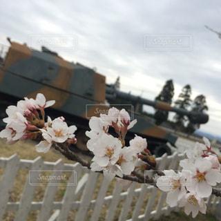 花の写真・画像素材[2064028]