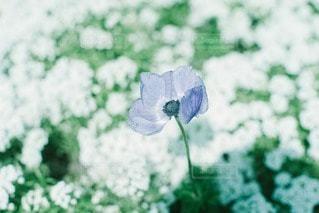 自然の写真・画像素材[43192]