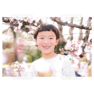 春の写真・画像素材[687456]