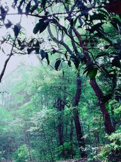 雨の明治神宮 - No.714643