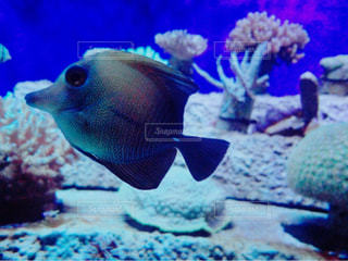 fish - No.744741