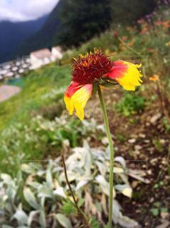 黄色の花 - No.744814