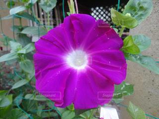 赤紫色 - No.744823